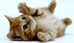 Kill-this-kitten